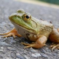 井の中の蛙カウンセラーになるな。 ~カウンセリングルーム i Balanceのブログ日記~
